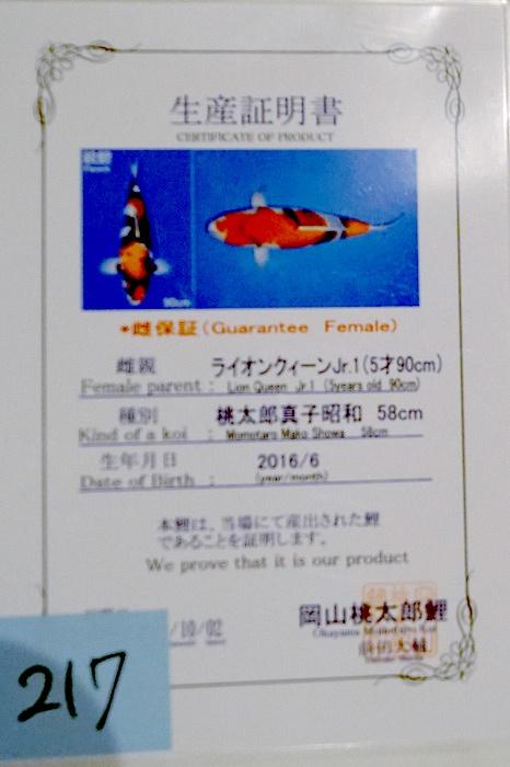 Showa 160116V 2