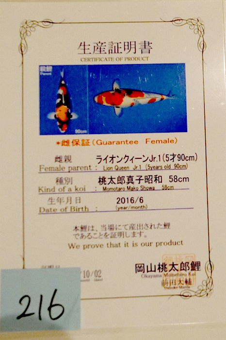 Showa 160117V 2
