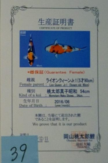 Showa 160120V 2
